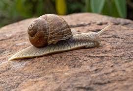 Immortal-Snail-Meme-Explained